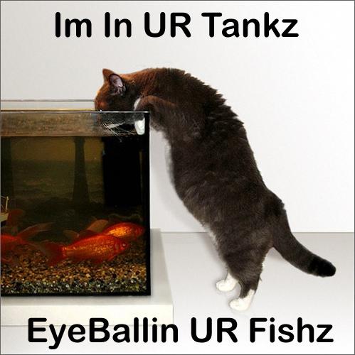 Im in ur tankz eyeballin yer fishz