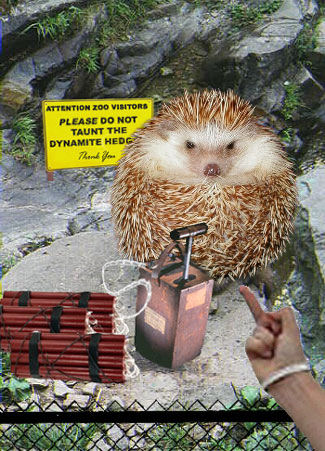 Do Not Taunt The Dynamite Hedgey.
