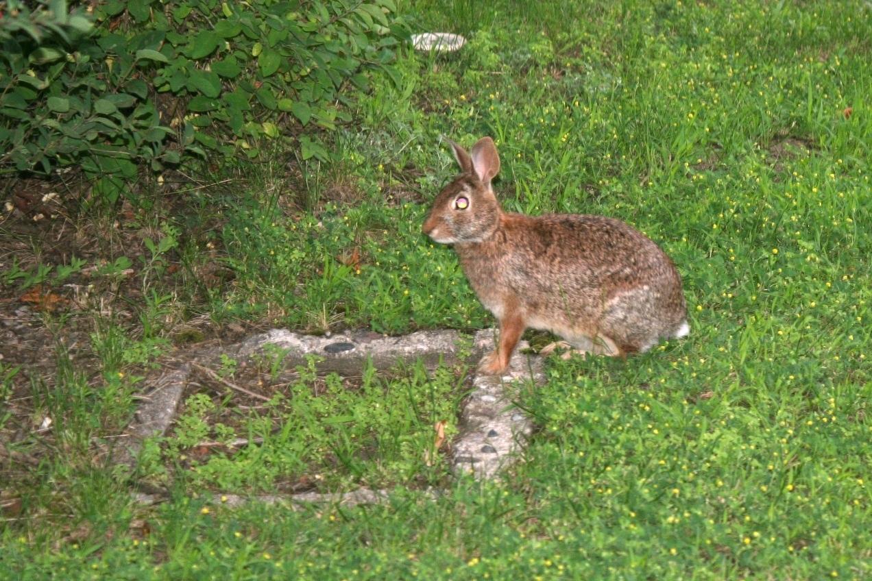 Wild Bunny!