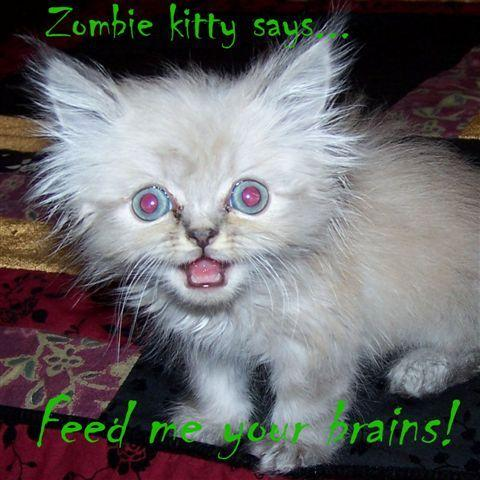Zombie Kitty says, 'feed me your brains!'