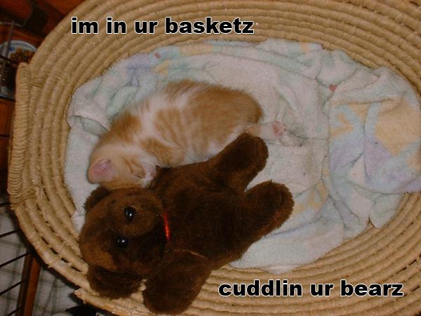 im in ur basketz cuddlin ur bearz