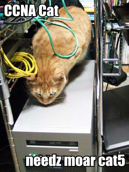 CCNA Cat needz moar CAT5