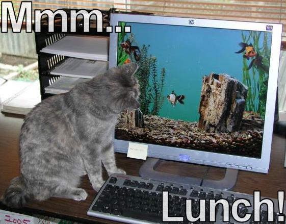 Mmm... Lunch!