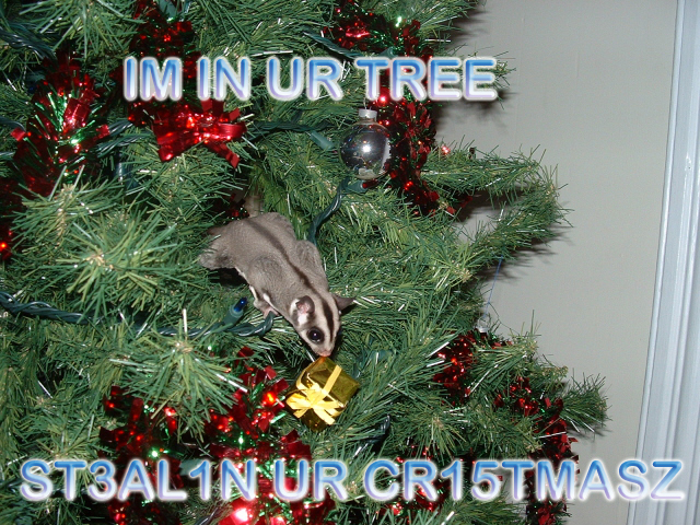 Im in ur tree, steelin ur cristmasz