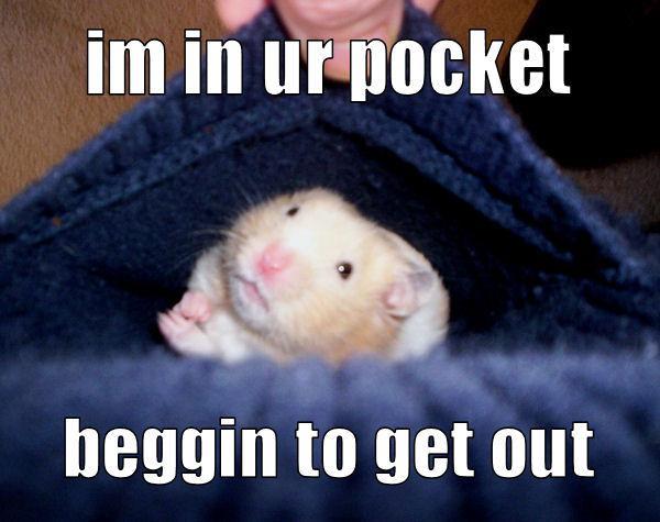 im in ur pocket beggin to get out
