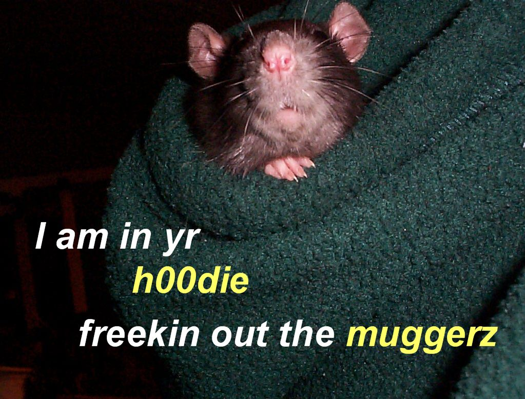 I am in yr hoodie freekin out the muggerz
