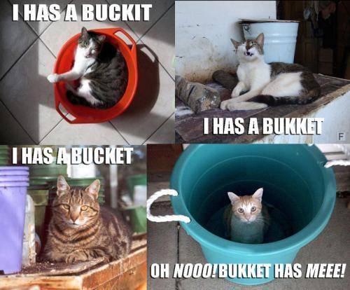 I has a buckit. I has a bukket. I has a bucket. Oh no! Bukket has me!