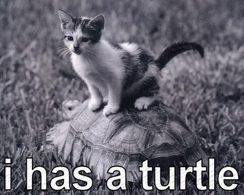 I has a turtle