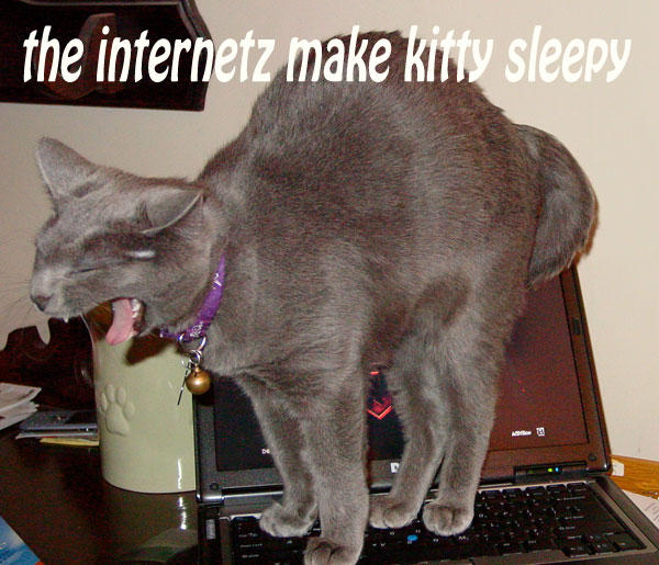 The internetz make kitty sleepy