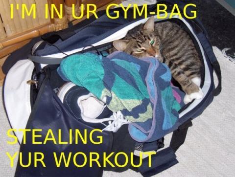 I'm in ur gymbag stealing yur workout
