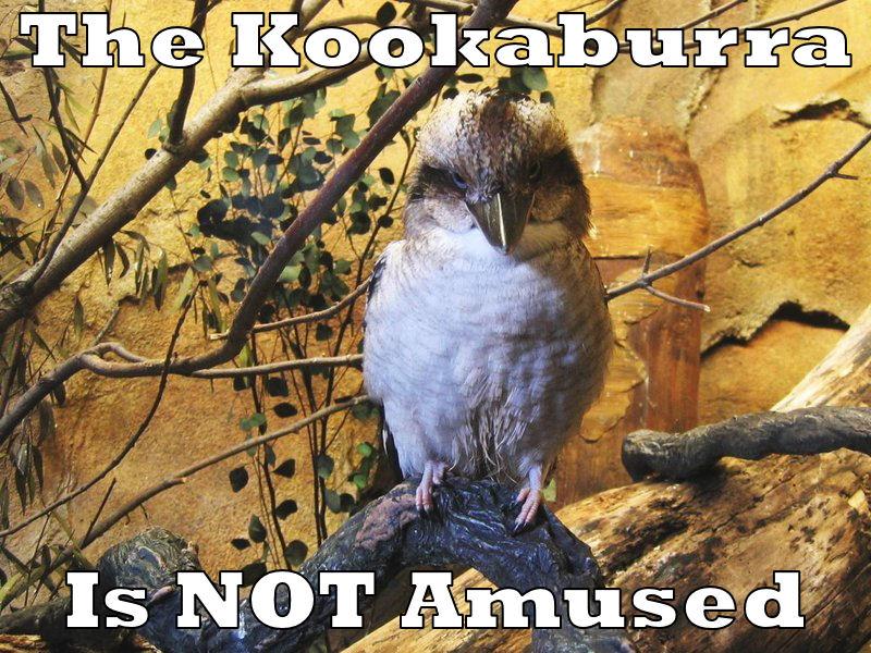 The Kookaburra is NOT amused