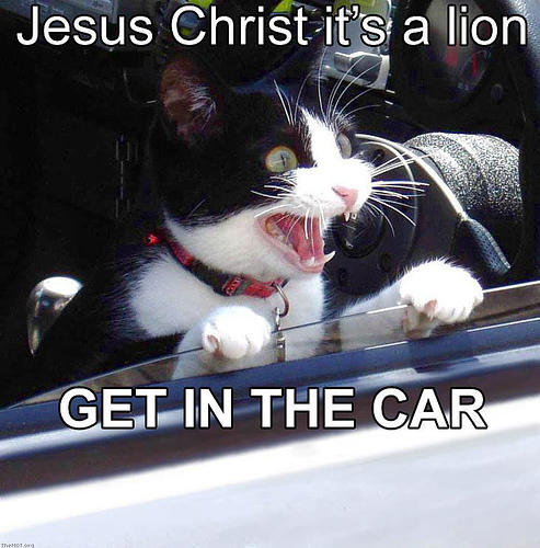 Jesus Christ it's a lion. GET IN THE CAR