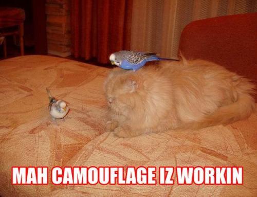 Mah camouflage iz workin'