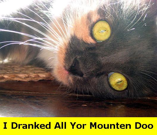 I dranked all Yor Mounten Doo