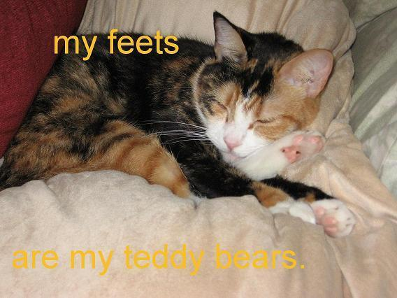 "Sleepy cat hugging back feet, text: ""My feets are my teddy bares"""