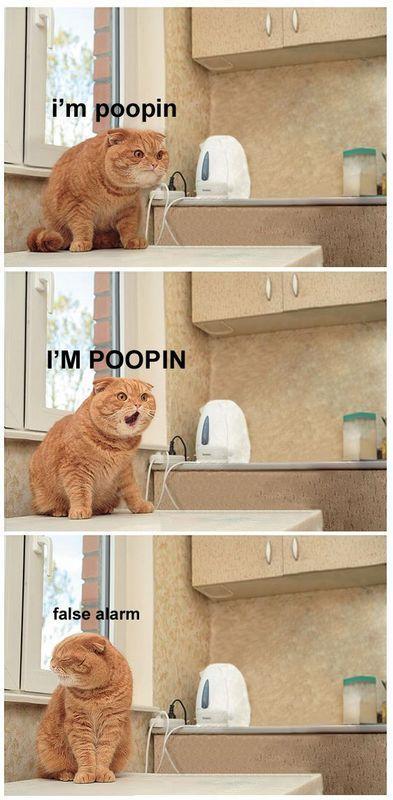 I'm poopin. I'M POOPIN! False alarm.