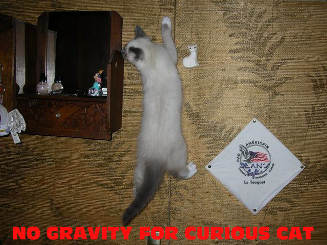 No Gravity for Curious Cat