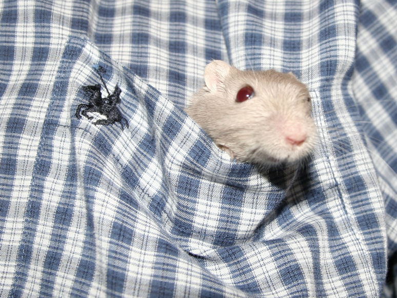 Pocket Gerb!