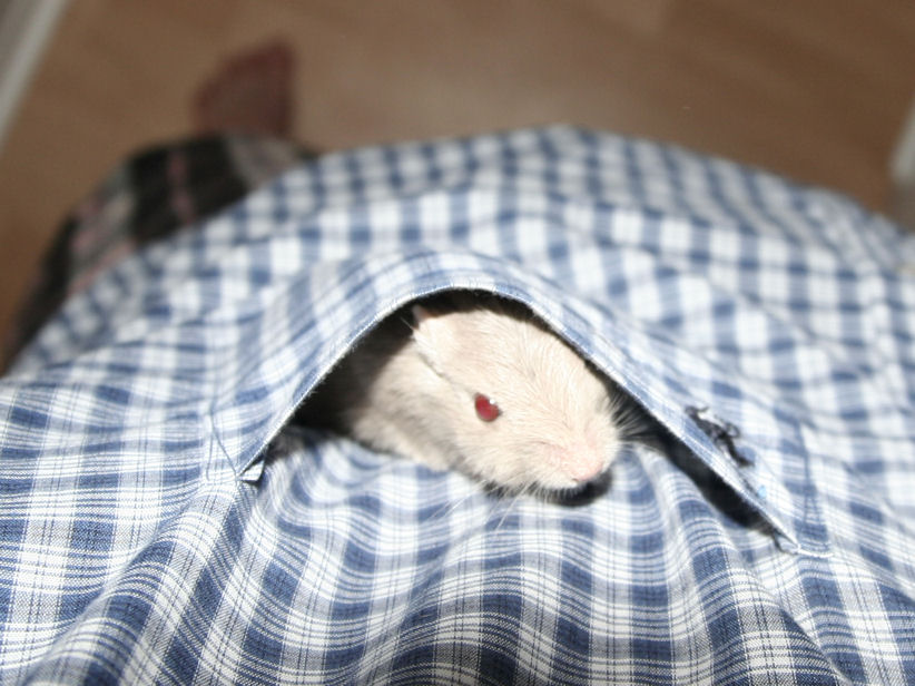 Pocket Gerb Again!