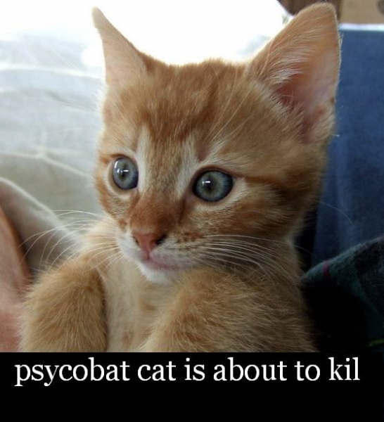 psycobat cat is about to kil