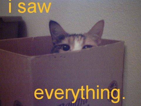 i saw everything