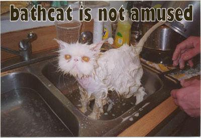 bathcat is not amused