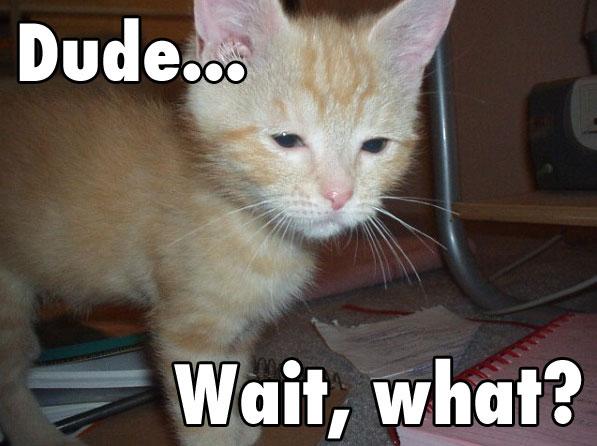 My Pet Cat Phish