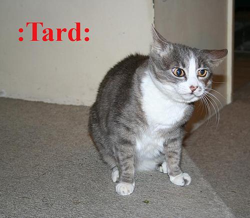:Tard:
